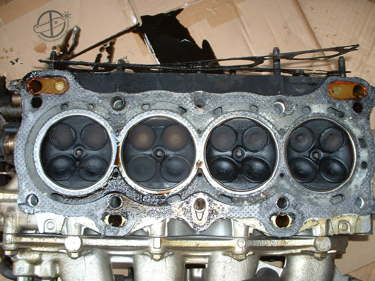 Re broken timing belt pics of valves and pistons advice needed zchf